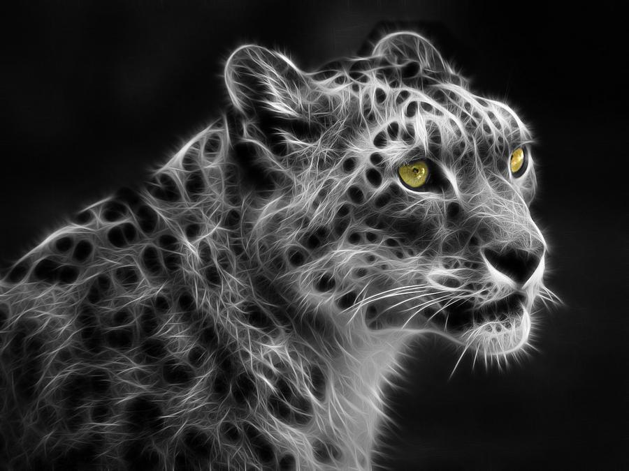 snow leopard upgrade digital