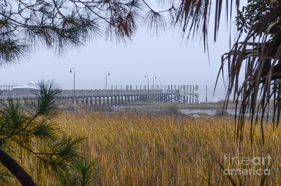 Southern Fog Photograph