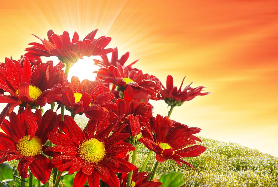 Background Photograph - Spring Blossom by Carlos Caetano