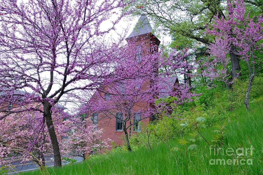 Spring Photograph - Spring Colors by Edward Sobuta