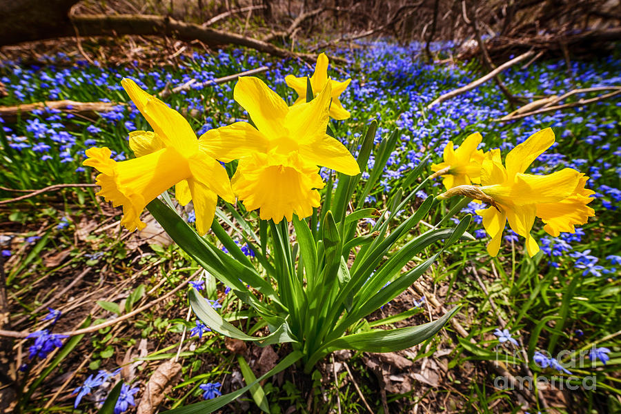 Wildflowers Photograph - Spring Wildflowers by Elena Elisseeva