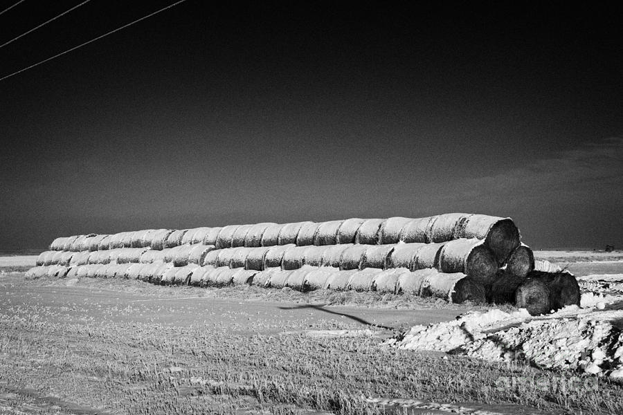 Stack Photograph - stack of frozen snow covered hay bales in a field Forget Saskatchewan Canada by Joe Fox