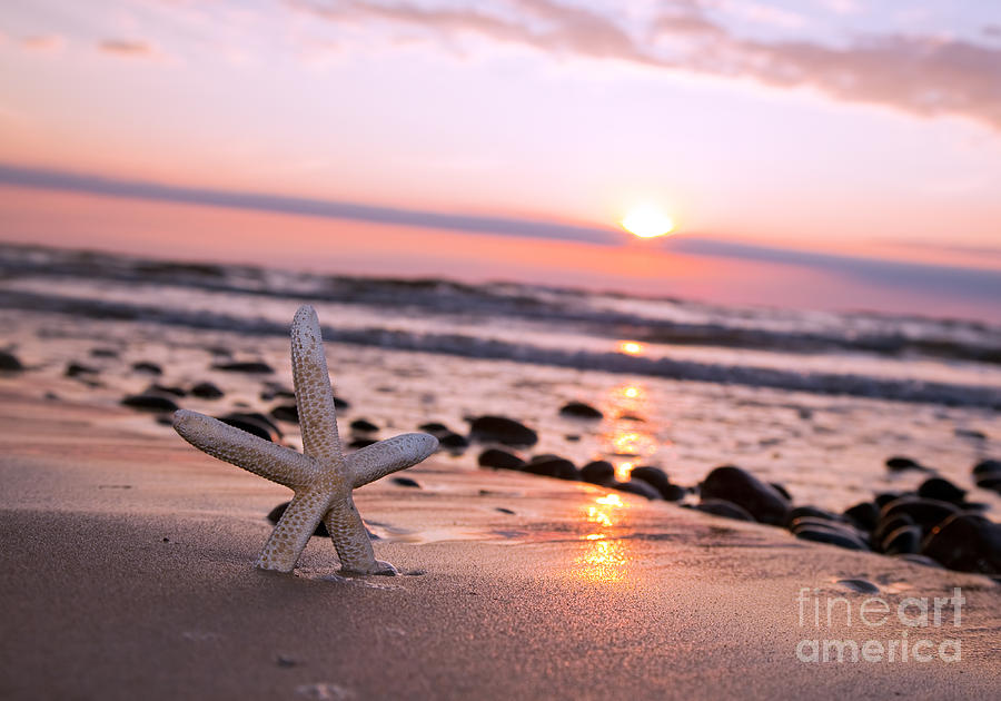Starfish Photograph - Starfish On The Beach At Sunset by Michal Bednarek
