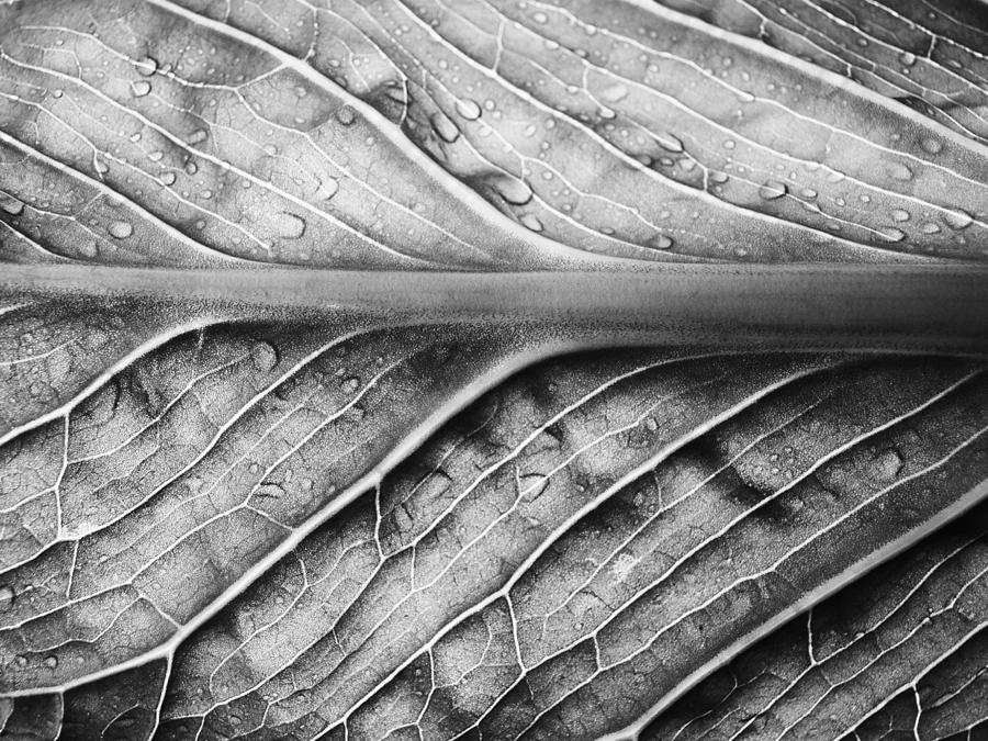 Leaf Photograph - Streamlined by Tom Druin