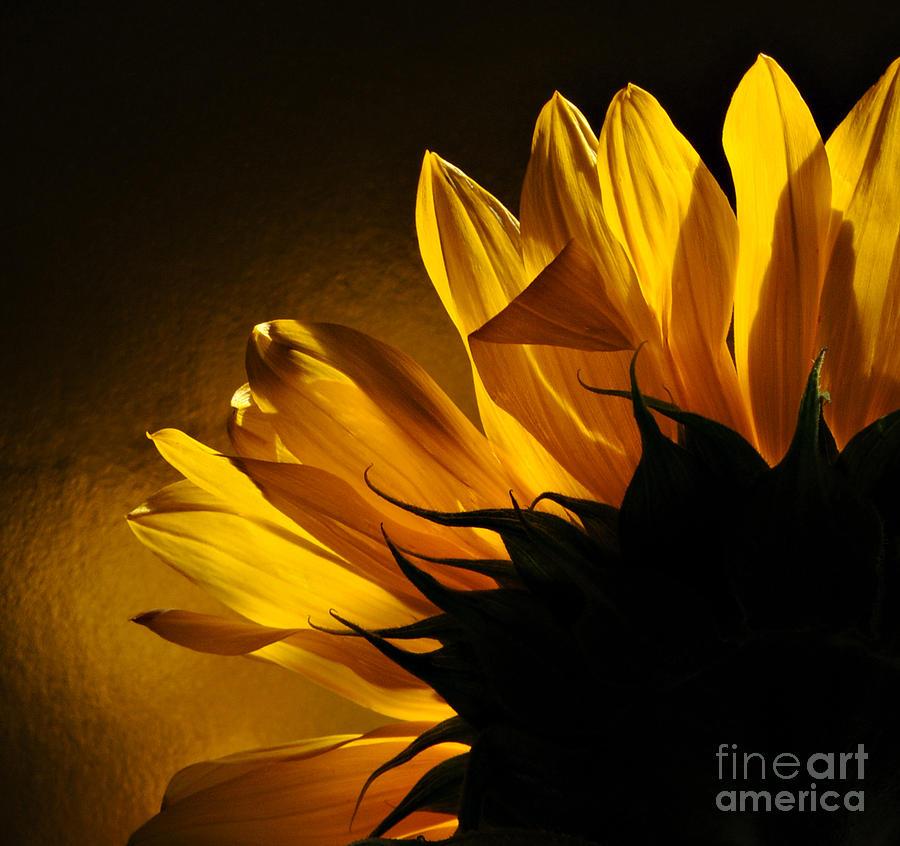 Sunflower Photograph - Sunflower Macro by Addie Hocynec