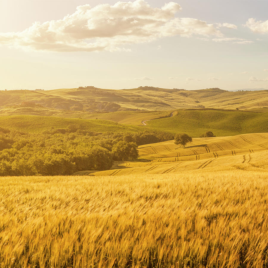 Sunset Tuscany Landscape Photograph by Focusstock