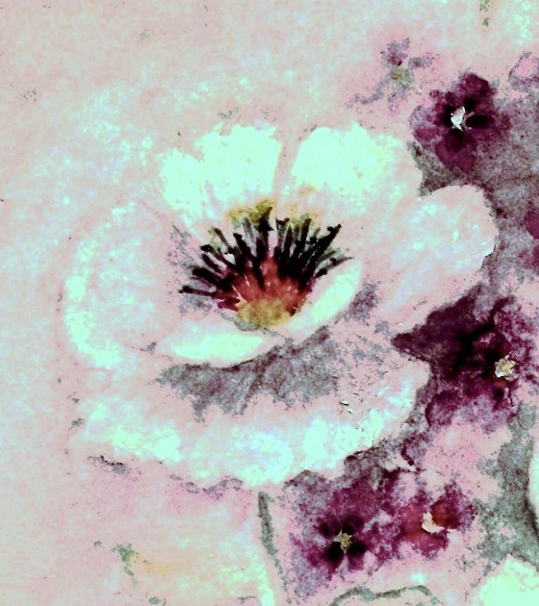 Rose Painting - Sweet Dreams by Hazel Holland