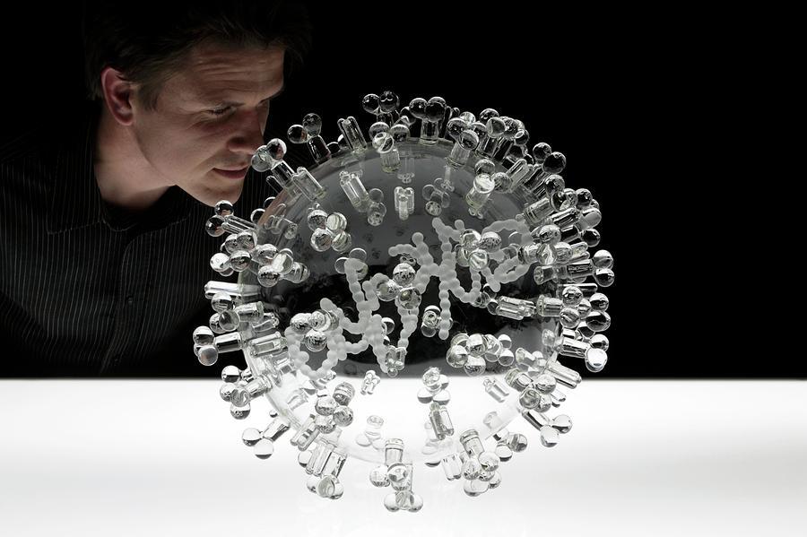 Human Photograph - Swine Flu Virus by Luke Jerram/science Photo Library