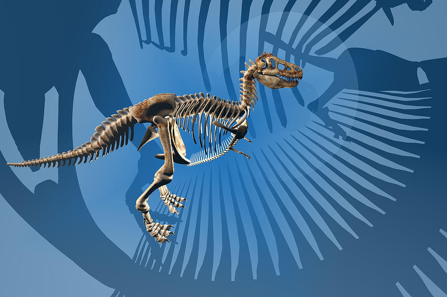 Artwork Digital Art - T. Rex Dinosaur Skeleton by Carol and Mike Werner