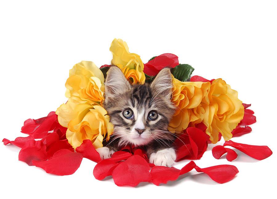 увидит с восьмым марта картинки с котятами нагреватель