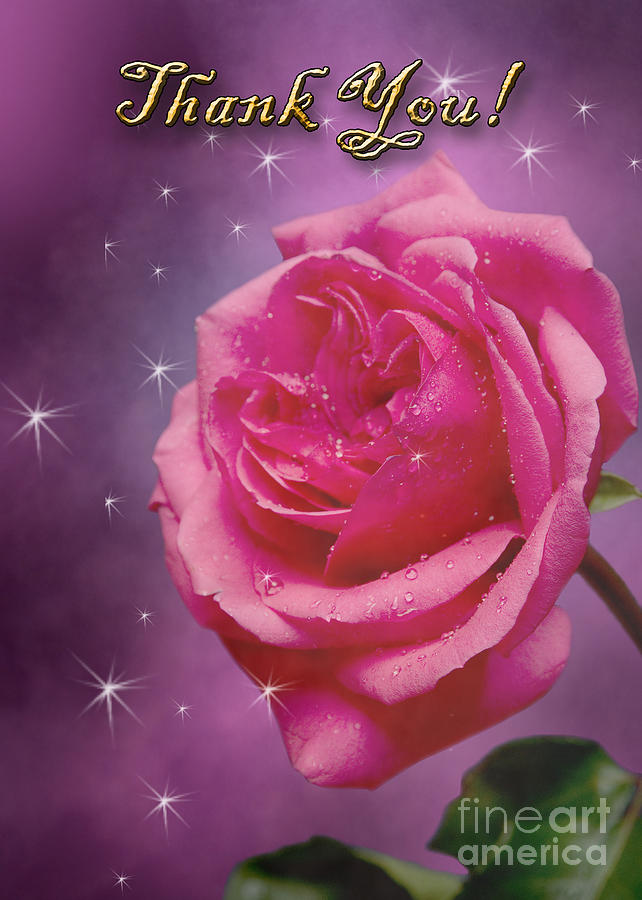 Pink Photograph - Thank You Rose by Jeanette K