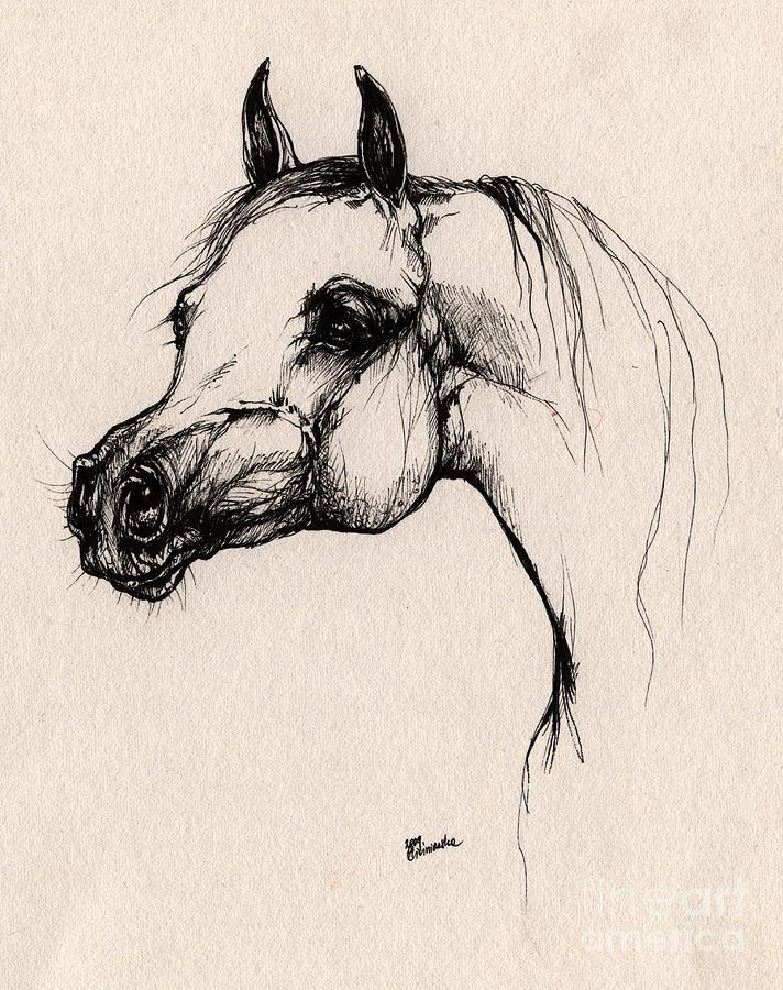 Arabian Horse Drawing - The Arabian Horse by Angel  Tarantella