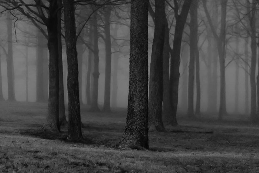 The Woods At Night Photograph