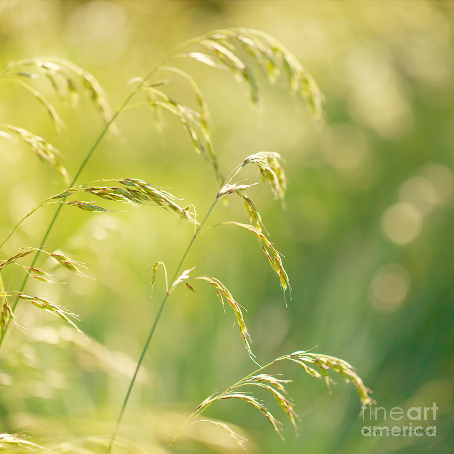 Closeup Photograph - Those Were The Days by Beve Brown-Clark Photography