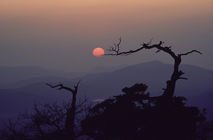 Landscape Photograph - Tree and Sun from Mt Scott by Richard Smith