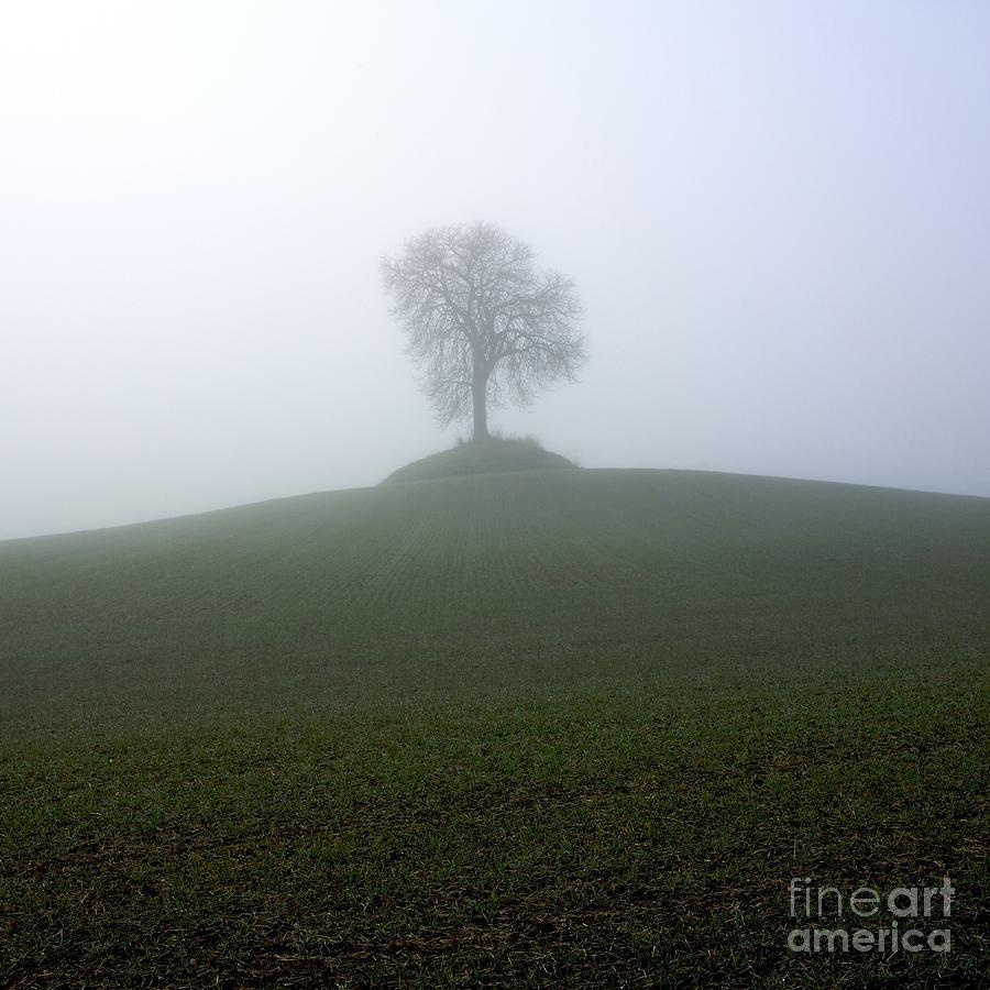 Agriculture Photograph - Tree by Bernard Jaubert