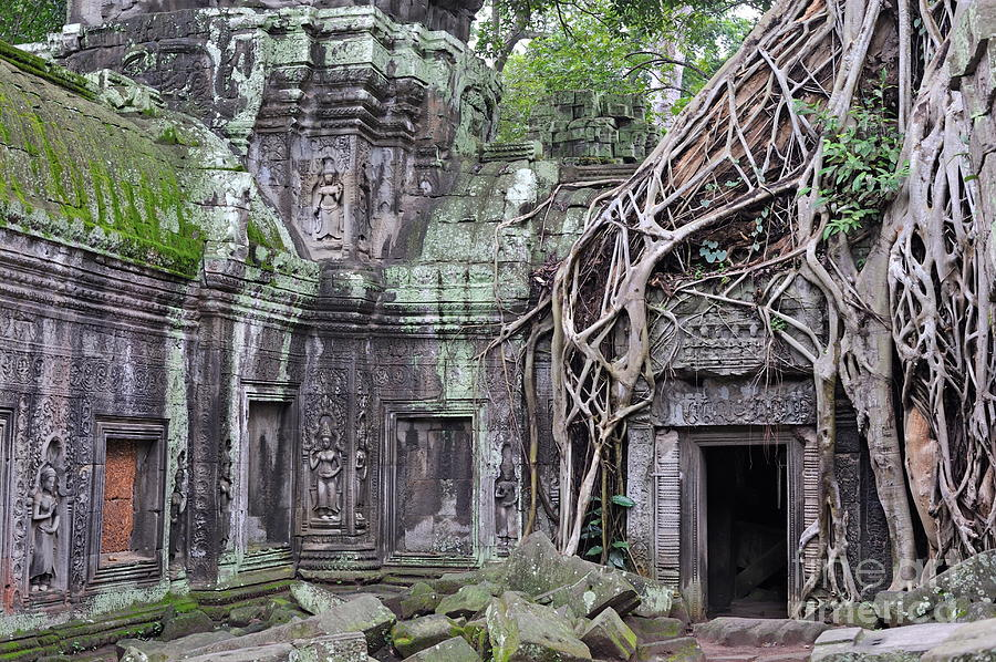 Angkor Photograph - Tree Roots On Ruins At Angkor Wat by Sami Sarkis