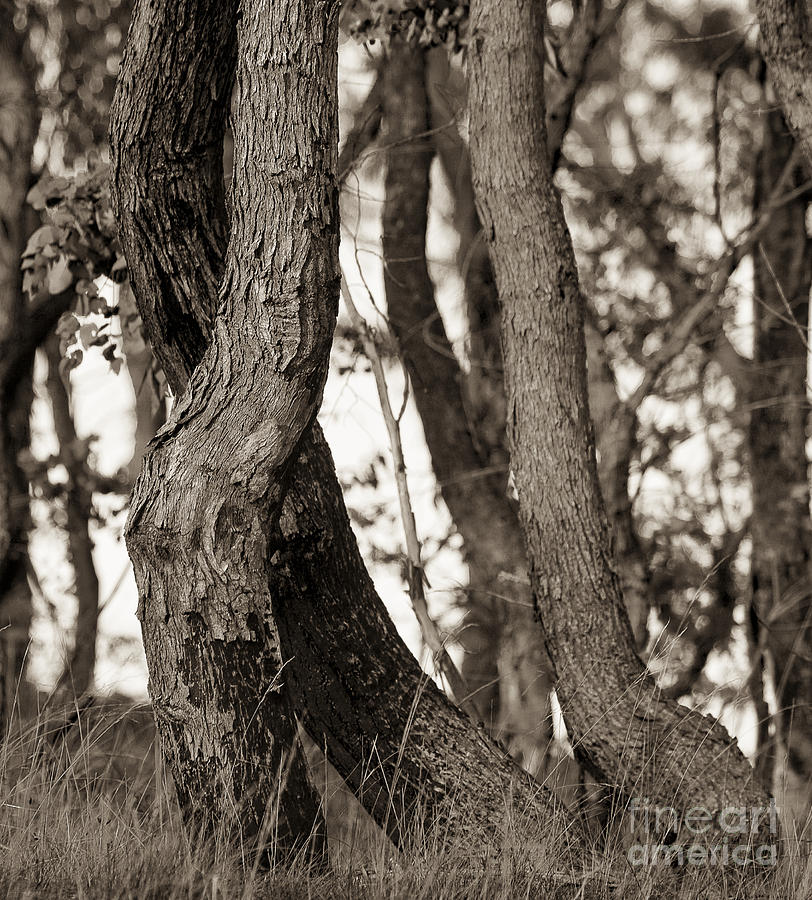 Australia Photograph - Trees by Steven Ralser