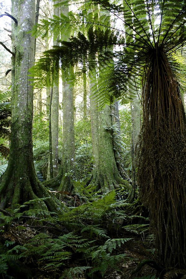Tree Photograph - Tropical Forest  by Les Cunliffe