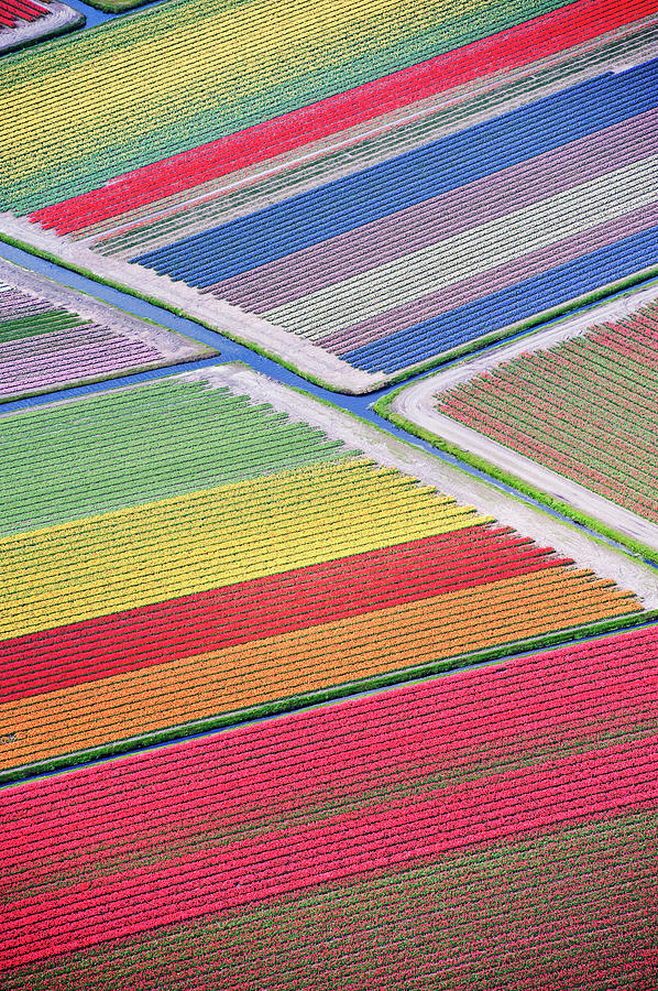 Tulip Fields Between Sassenheim And Photograph by Atlantide Phototravel