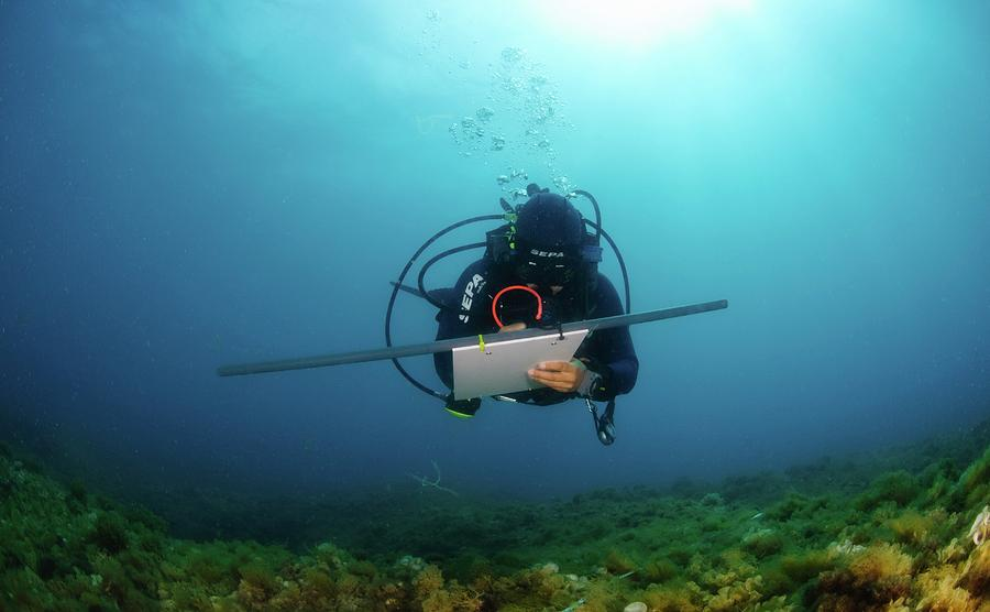 Adult Photograph - Underwater Survey by Photostock-israel