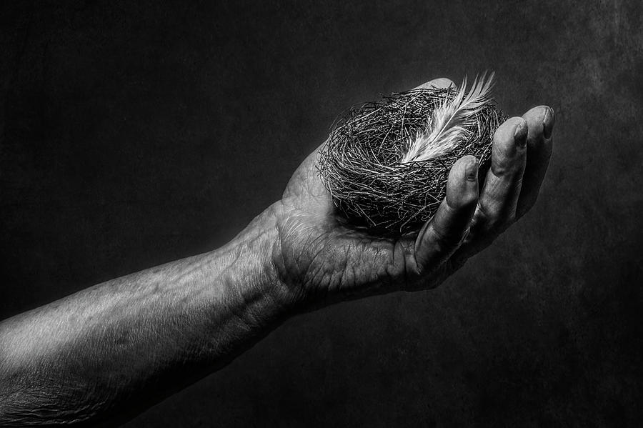 Hand Photograph - Untitled by Stephen Clough