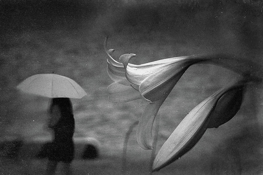 Lily Photograph - Untitled by Teru