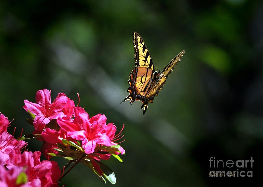 Spring Day Photograph - Up And Away by Nava Thompson