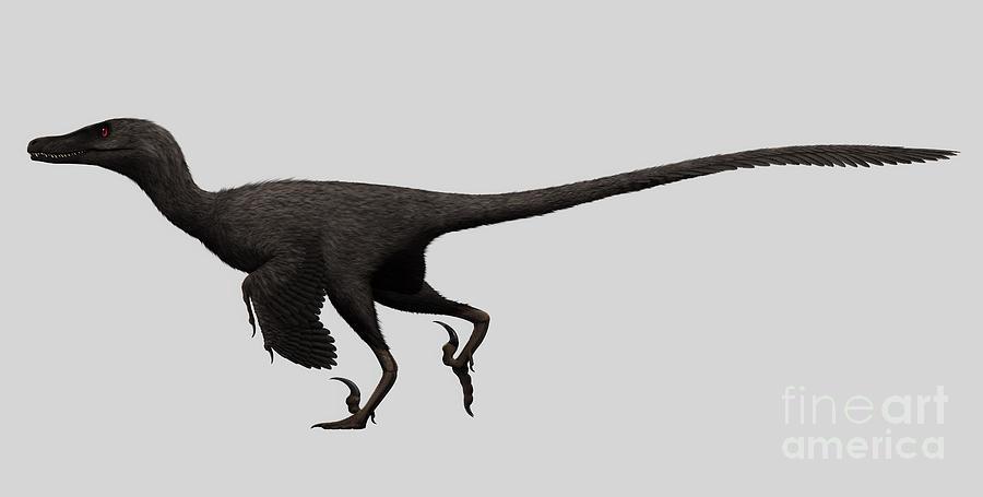 Velociraptor Mongoliensis Digital Art