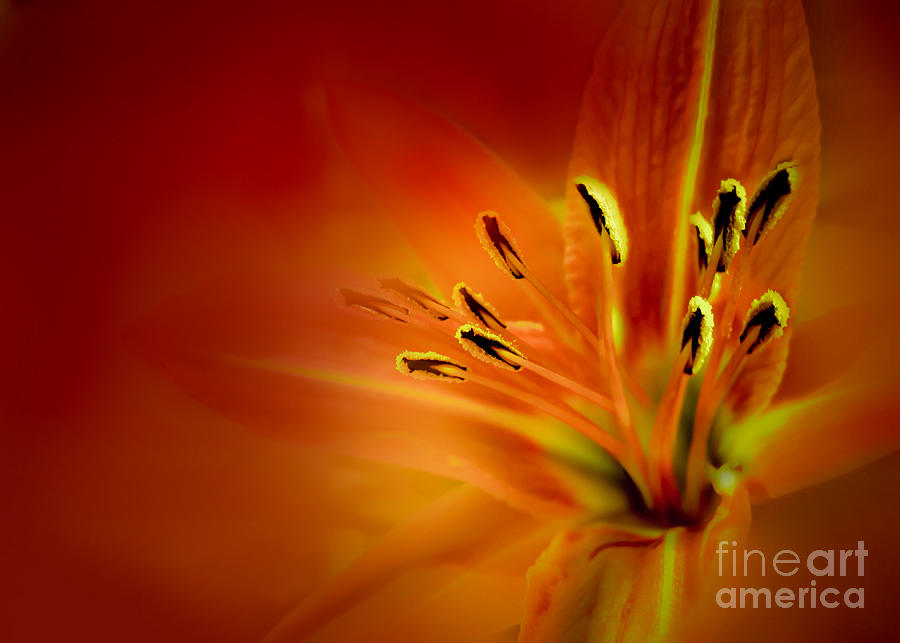 Flower Photograph - Venus by Mehran Akhzari