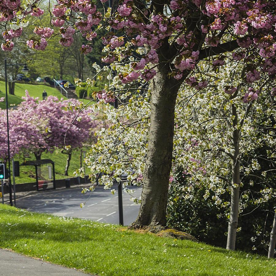 Victoria Park Chatham by Dawn OConnor