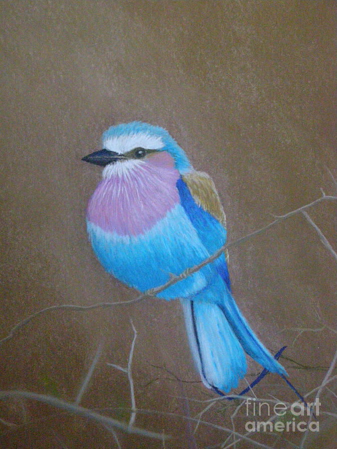 Violet-breasted Roller Bird by Lynn Quinn