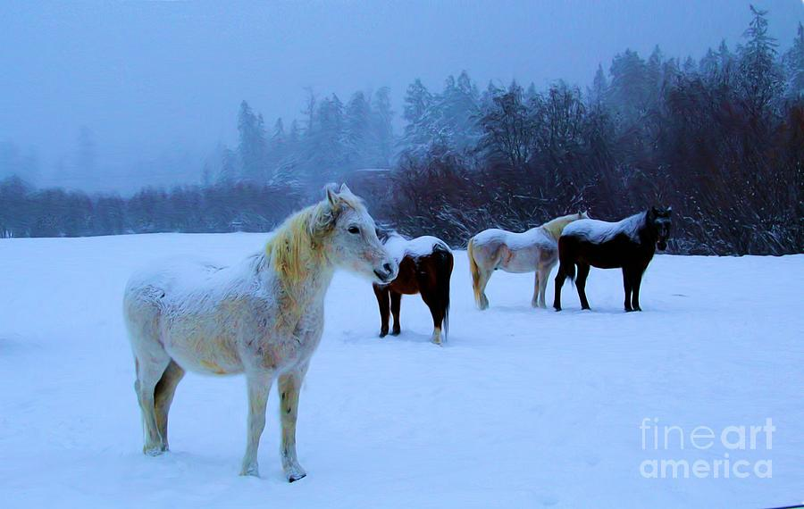 Horses Photograph - Waiting by Roland Stanke