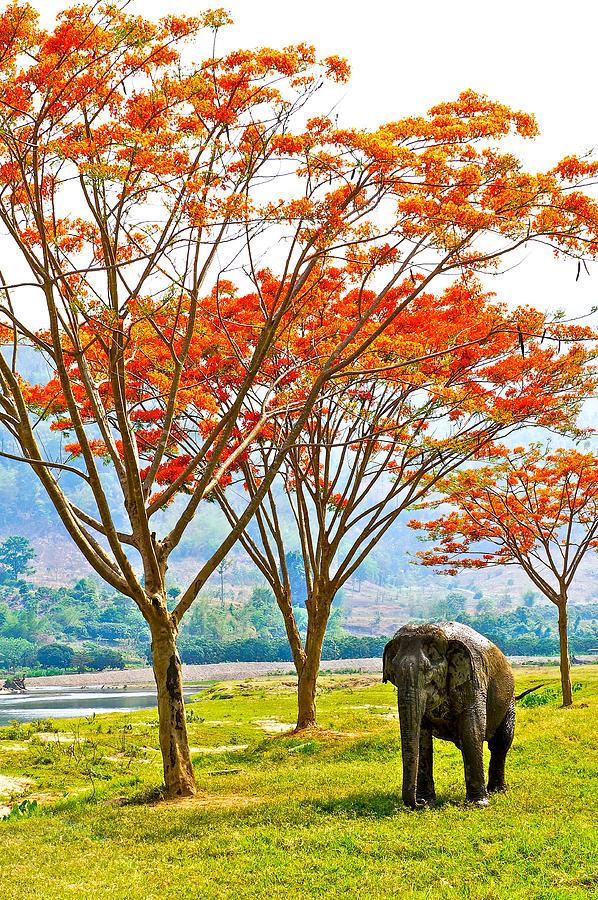 Elephant Photograph - Walking Free by Stephanie Frankle
