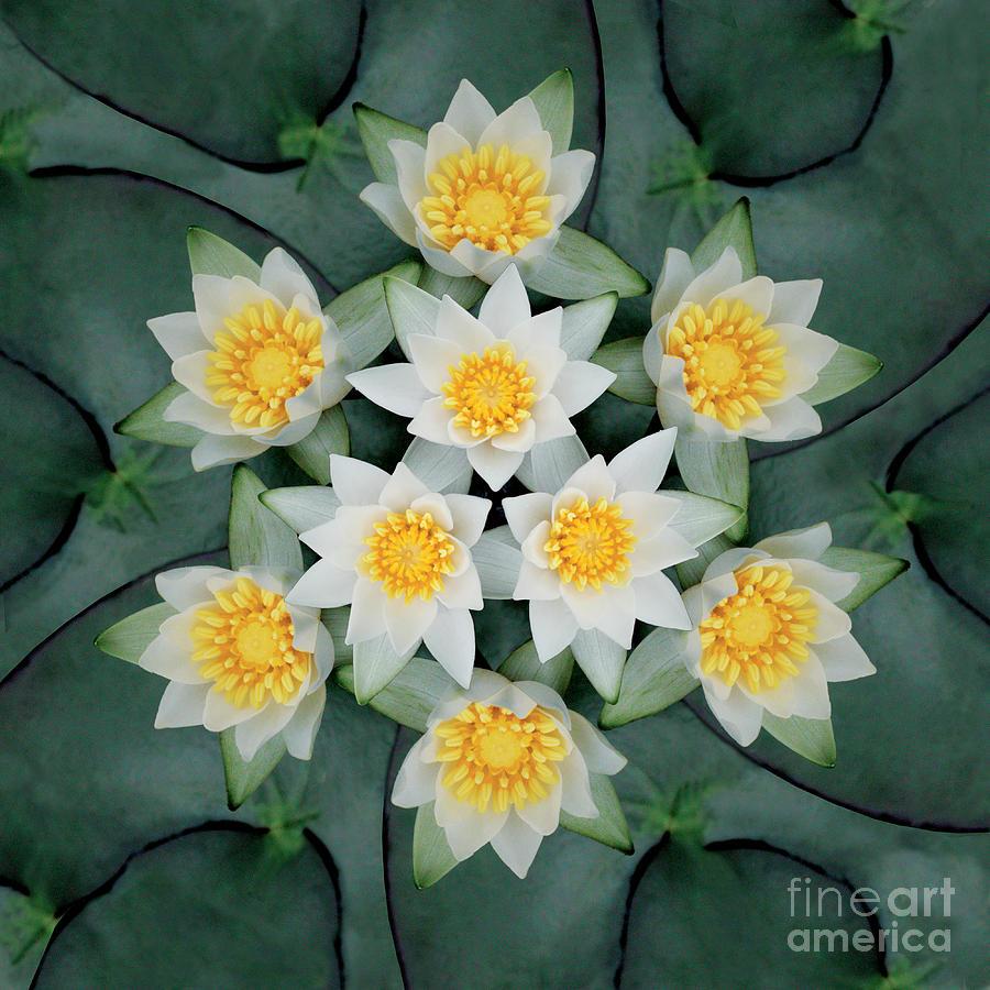 Rainbow Photograph - Waterlily Mandala by Susan Bloom