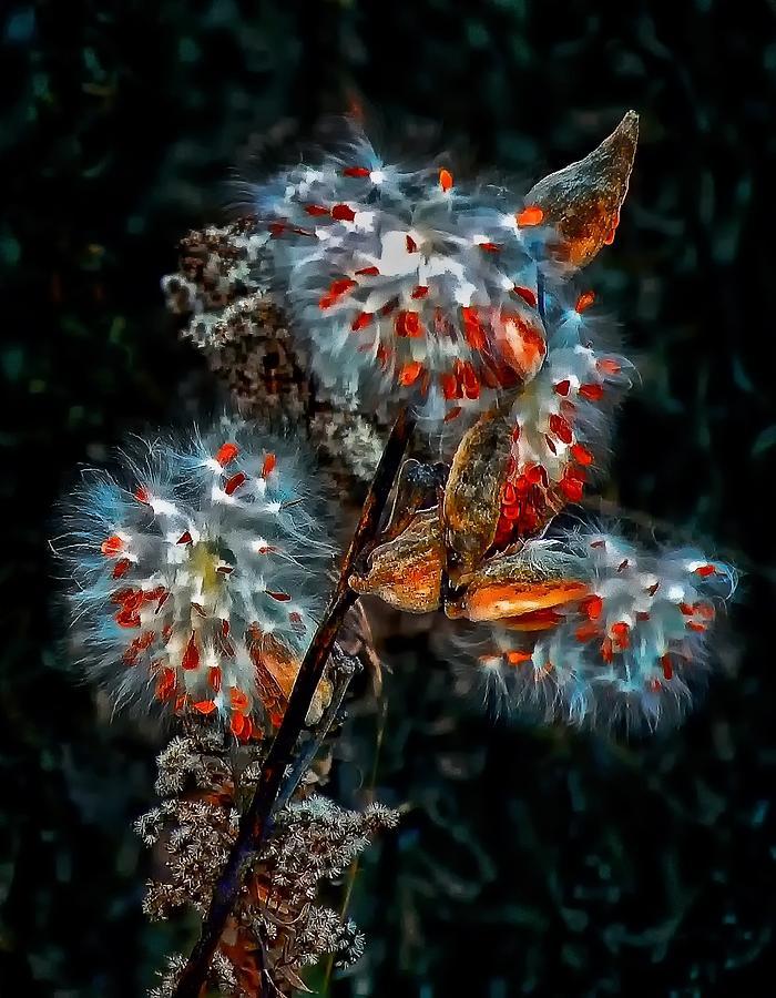 Weed Photograph - Weed Galaxy  by Steve Harrington