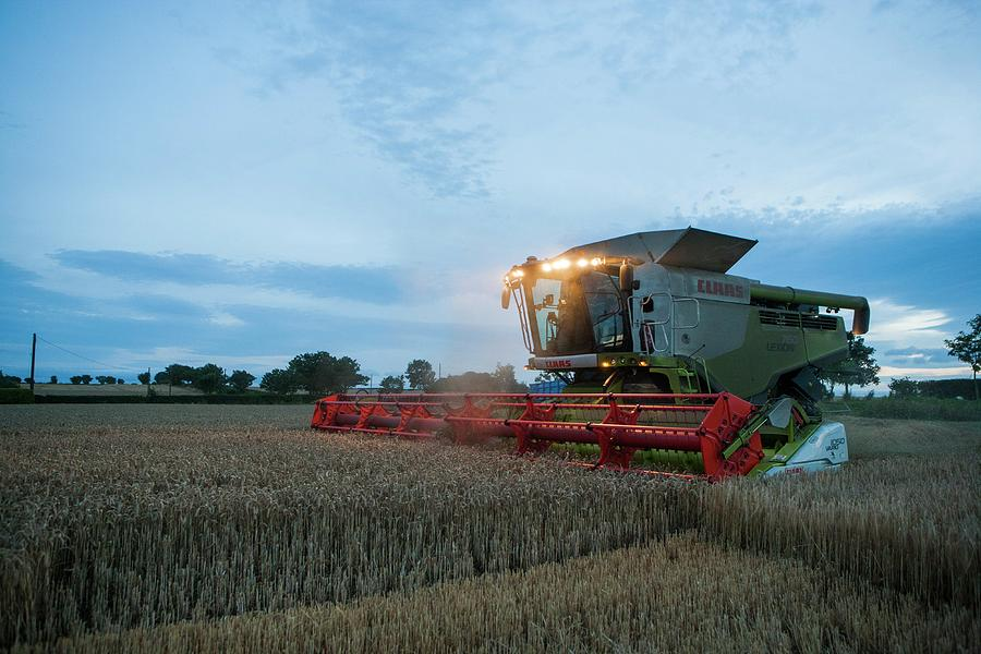 Common Wheat Photograph - Wheat Harvesting At Dusk by Lewis Houghton/science Photo Library