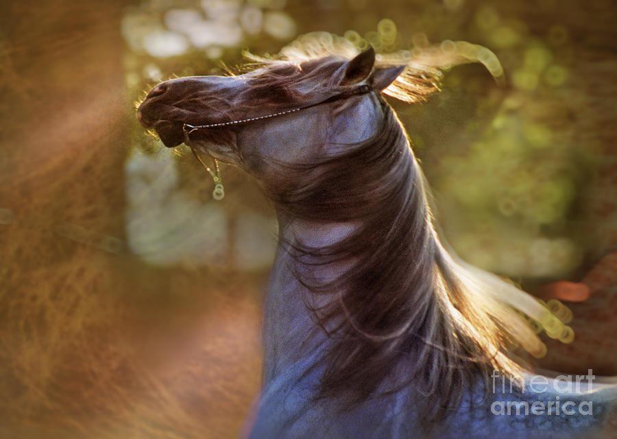 Horse Photograph - Wild Heart by Angel  Tarantella