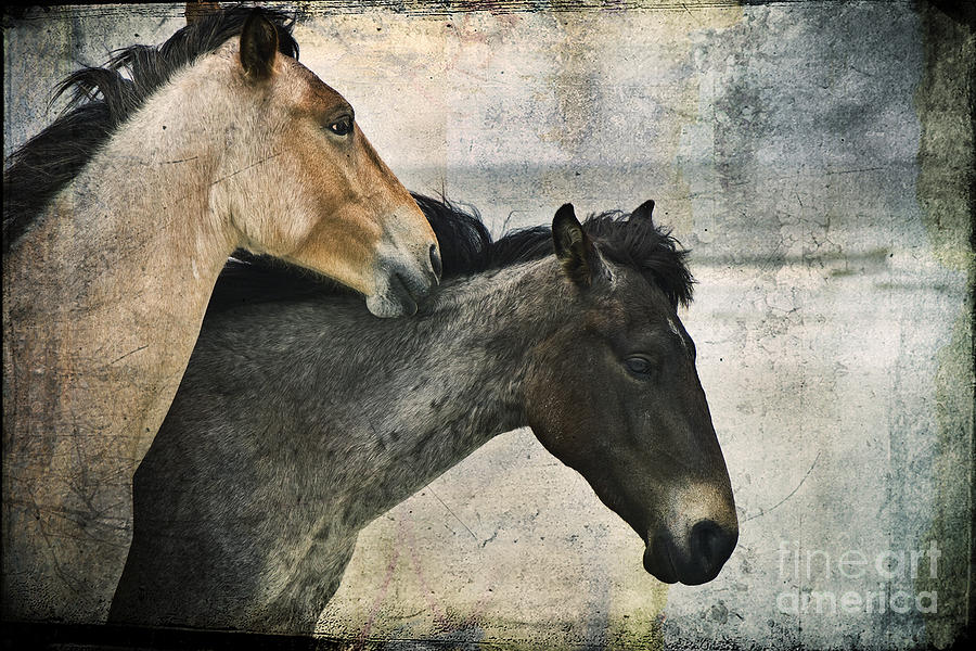 Cumberland Island Photograph - Wild Love by Laura Marie Jones