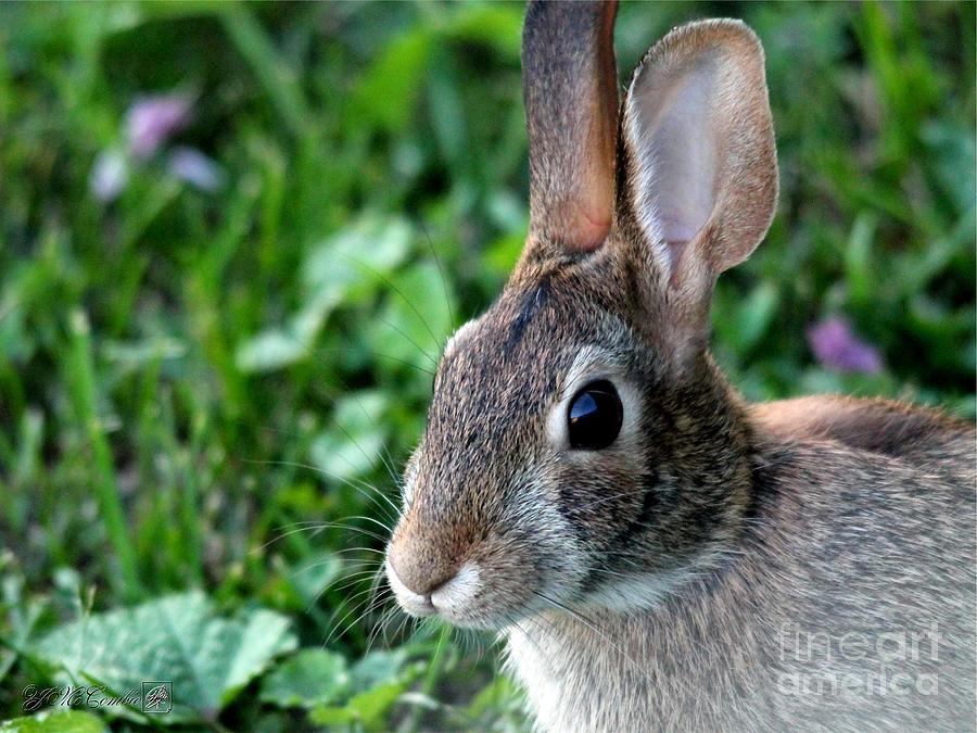 Wild Photograph - Wild Rabbit by J McCombie