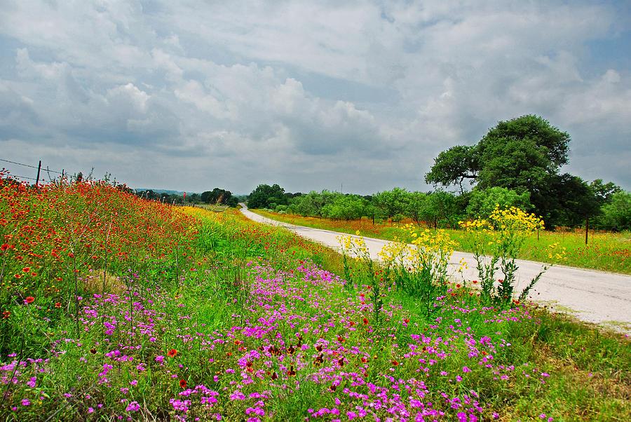 Landscape Photograph - Wildflower Wonderland by Lynn Bauer