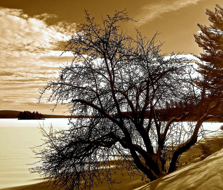Willow Photograph - Willow On Silver Lake by Elizabeth Tillar