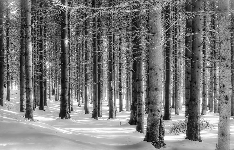 Trees Photograph - Winter Forest by Christine Czernin Morzin