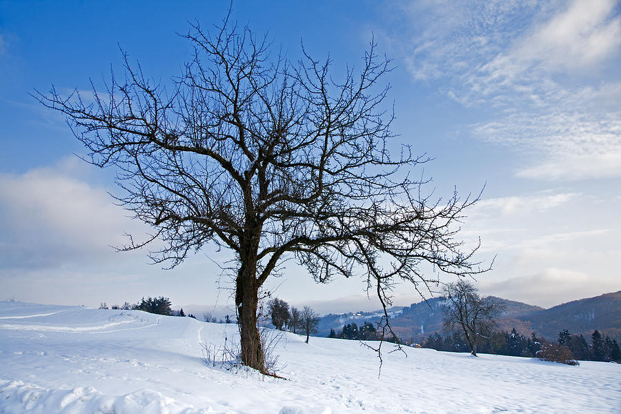 Trees Photograph - Winter Landscapes by Ian Middleton