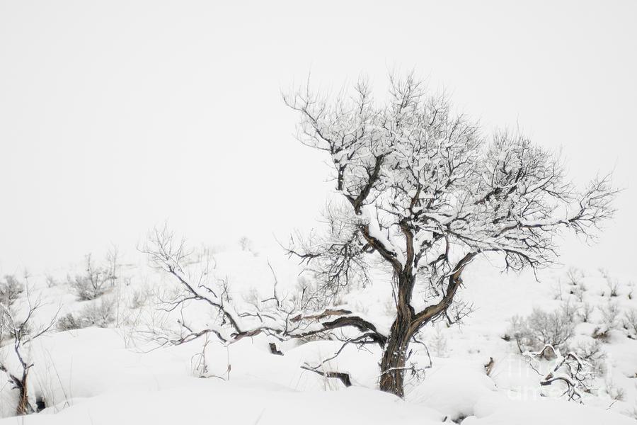 Winter Sage Photograph