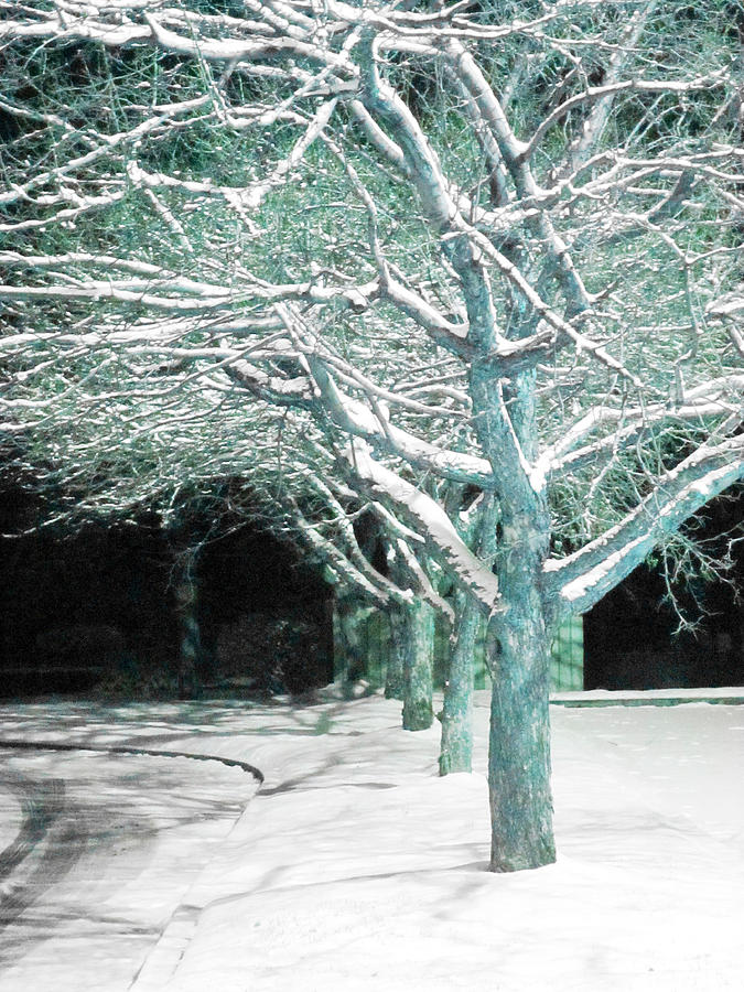 Winter Trees Photograph by Guy Ricketts