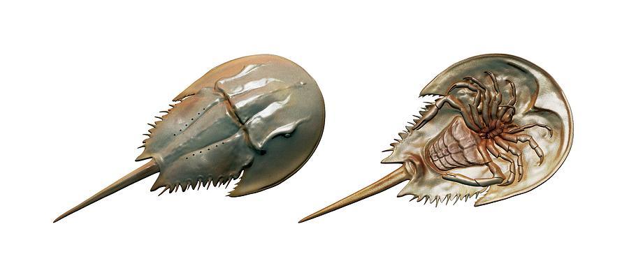 Quetzalcoatlus 2-xiphosura-mikkel-juul-jensen