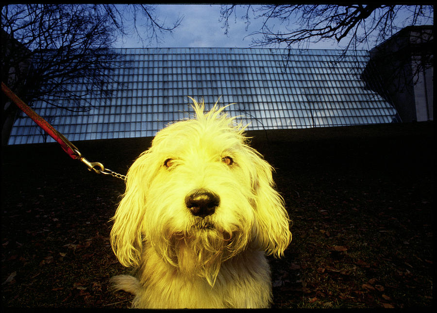 Animals Photograph - Yellow Dog by Chip Simons