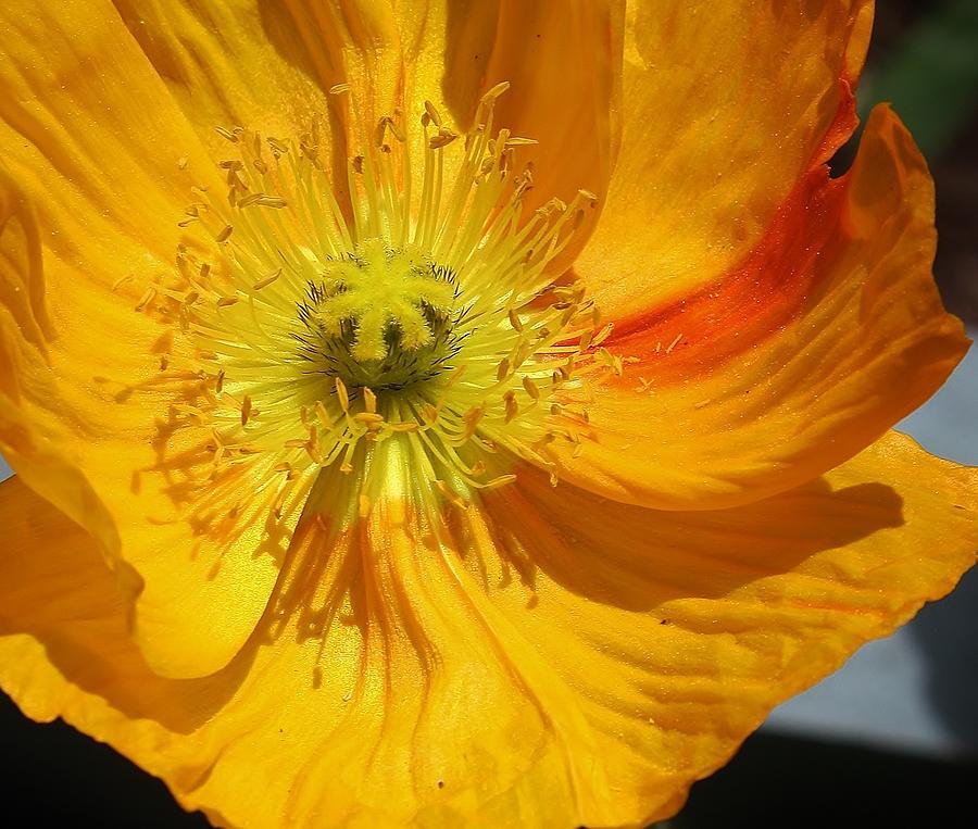Flora Photograph - Yellow Wonder by Bruce Bley