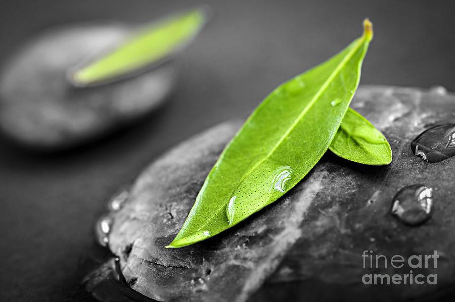 Stone Photograph - Zen Stones by Elena Elisseeva